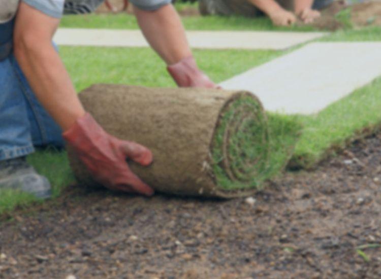 Lawn Turfing & Seeding